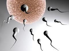 How do you get pregnant - a picture of a woman's egg and sperm